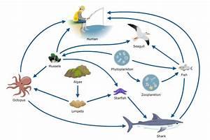 Ocean - The Marine Biome