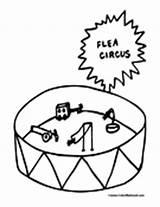 Flea Coloring Fleas Colormegood Animals sketch template