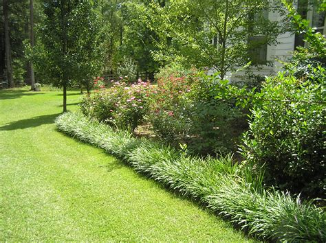 border grasses for landscaping saturday morning grass cut blog archives