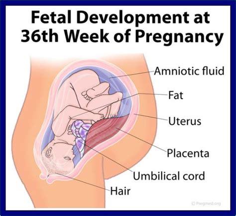 Ciri Hamil Muda 2 Bulan Ciri Ciri Orang Hamil Muda 2 Minggu 1 Bulan 2 Bulan