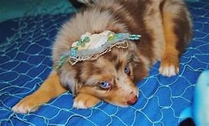 why does the u s spend extra on health care than other shamrock rose aussies update we have puppies born 5