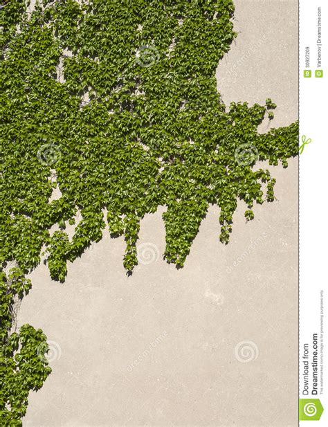 House Wall With Climbing Plants Stock Image  Image Of