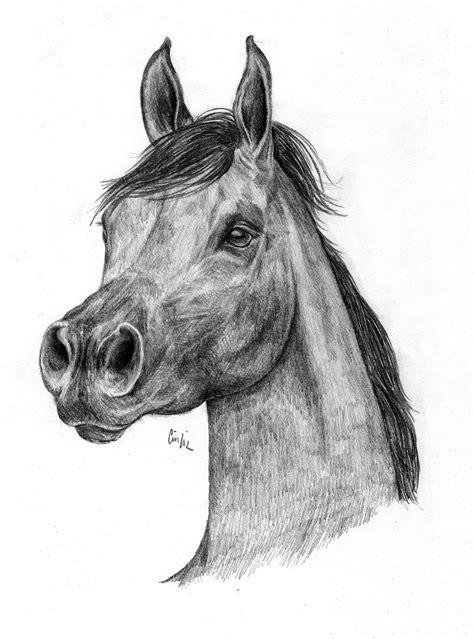cavallo arabo disegno libero