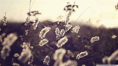 Freedom Sepia Nature Wallpapers Flowers Field Depth