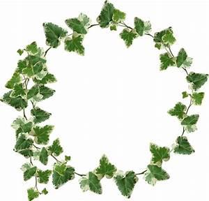Ivy Crown / Transparency   Yebbi Gongju   Green   Pinterest