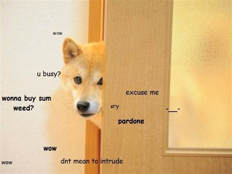 105 Best Images About Doge On Pinterest
