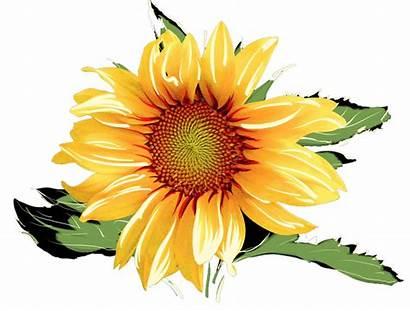 Sunflower Watercolor Sunflowers Transparent Clipart Cake Clip