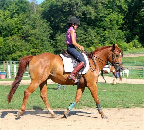 lessons training riding horse horseback farm king