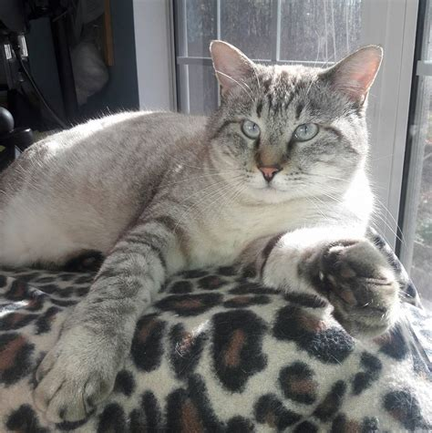adopt charleston cats home facebook