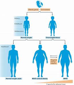 Regulation Of The  U0026 39 Metabolically Healthy Obese U0026 39  Phenotype