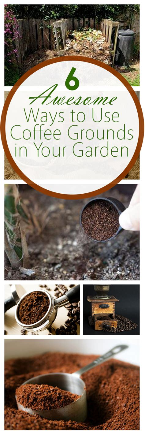 Ability to work early morning hours. 6 Awesome Ways to Use Coffee Grounds in Your Garden ~ Bees ...