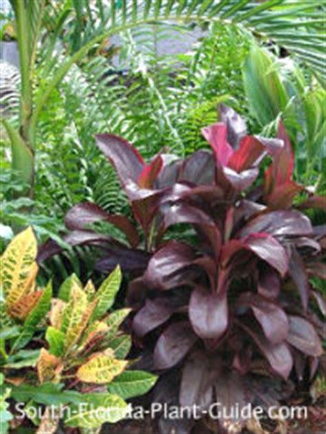 guide  florida landscape plants   southern