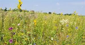 Bienen Vertreiben Essig : byodo nimmt sich der verantwortung gegen ber mensch tier und natur an unsere bienen co2 ~ Whattoseeinmadrid.com Haus und Dekorationen