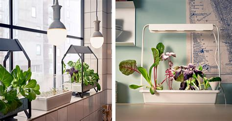 Indoor Gardening : Ikea Launches Indoor Garden That Can Grow Food All Year
