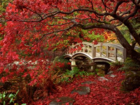 hd autumn wallpapers  images fun