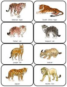 list of big cats image gallery names big cats