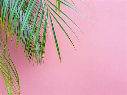 Palm Trees Against Noosa Australia Palms Leaf