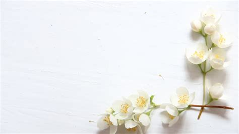 stock video  flowers frame  white wooden background