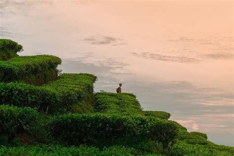 wisata populer  rekomended kebun teh nglinggo