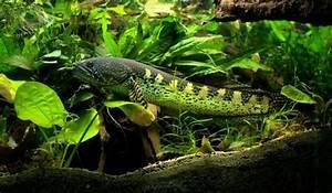 Poisson Aquarium Eau Chaude : aquarium eau douce chaude poisson d eau douce pas cher ~ Mglfilm.com Idées de Décoration
