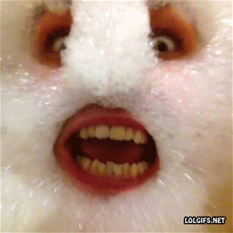 Bubble Bath Meme - hot bubble bath memes