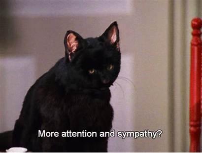 Salem Cat Sabrina Teenage Gifs Anything Popsugar