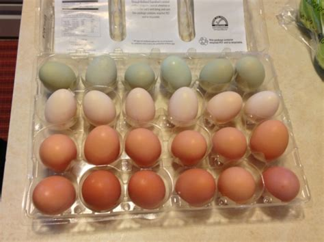 what is a cage free egg cage free free range pasture raised or organic eggs an egg ucation huffpost
