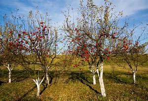 Quoi Planter En Automne : des arbres ~ Melissatoandfro.com Idées de Décoration
