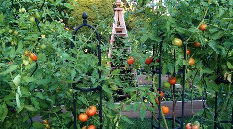 a late summer vegetable garden newport