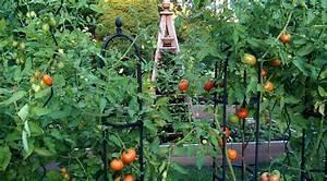 A Late Summer Vegetable Garden - Private Newport