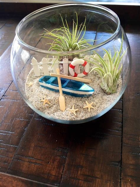 air plant terrarium beach terrarium glass terrarium diy etsy