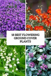 18 Best Flowering Ground Cover Plants For Your Garden