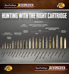Is There A Perfect Firearm For Predator Hunting Find Out