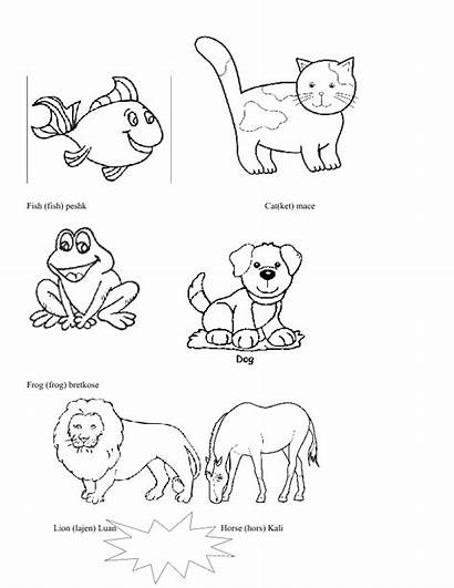 Animals Coloring Mistake Found