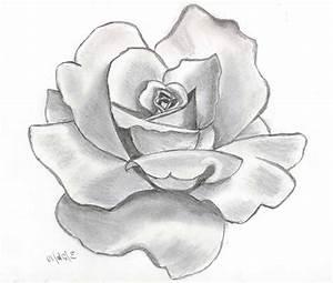 Flowers 3D Pencil Drawings - Drawing Of Sketch