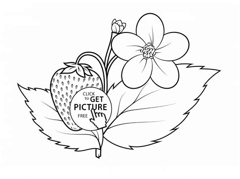 Strawberry Plant Coloring Page For Kids, Fruits Coloring