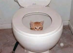 cats using the toilet tout sur les liti 232 res et maisons de toilette pour votre