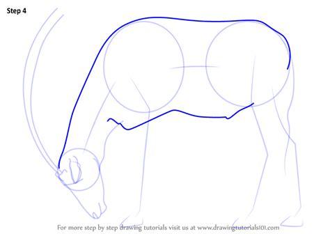 learn   draw  arabian oryx wild animals step