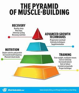 The Pyramid Of Muscle