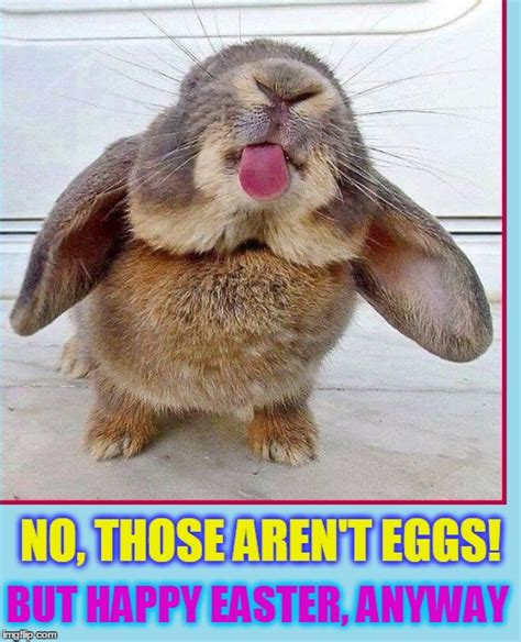Cute Easter Meme - the truth about easter bunnies imgflip