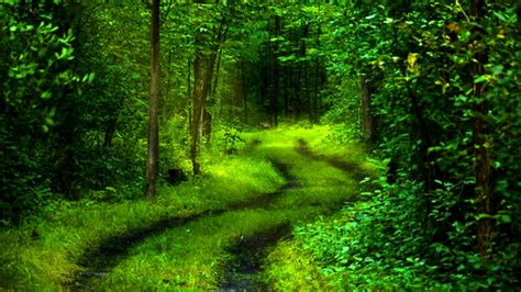 3d Green Nature Wallpaper by About Hd Wallpapers Collection High Resolution Quality Photo