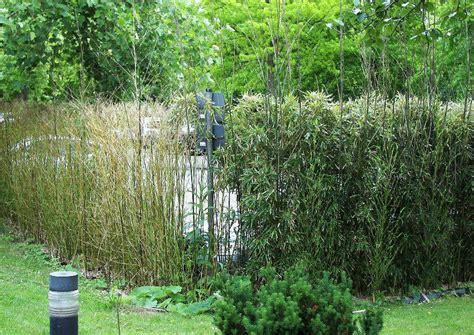 Die Hecke Natuerlicher Zaun Und Sichtschutz by Bambushecke Als Sichtschutz
