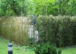 Bambus Pflanzen Sichtschutz : bambushecke als sichtschutz ~ Markanthonyermac.com Haus und Dekorationen