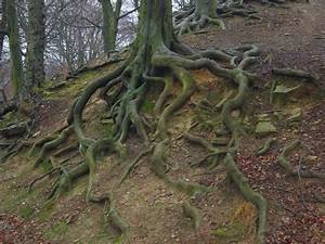 Beautiful Trees With Roots Tree roots by paulinemoss ...