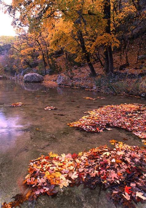lost maples state natural area nature texas parks wildlife department