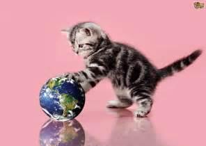 cats world records pets4homes