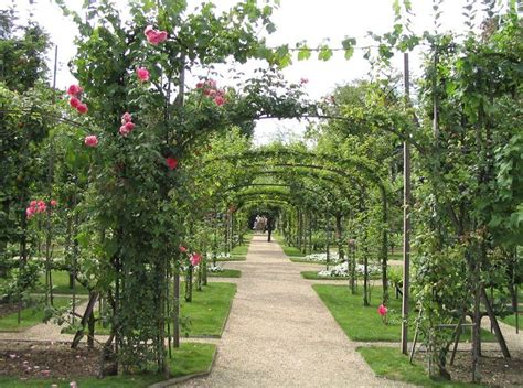 espalier orchard design google search orchard design