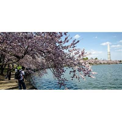 National Cherry Blossom Festival - ThePhotoExplorer.com