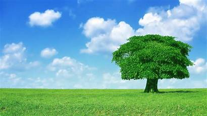 Tree Backgrounds Wallpapers Background