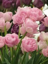 seindah mawar berduri home facebook